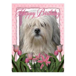 Happy Birthday - Lowchen Postcard