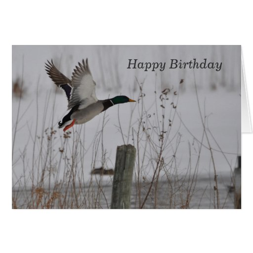Happy Birthday Mallard Duck Greeting Card