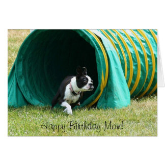 Happy Birthday Mom Agility Boston Terrier Card