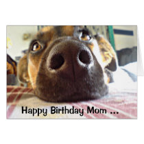 Happy Birthday Mom the One I look up to! Cute Dog Card