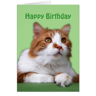 Happy Birthday Orange and White Thoughtful Cat Greeting Card