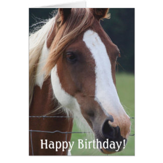 Happy  Birthday Paint Horse Equestrian Riding Card Cards