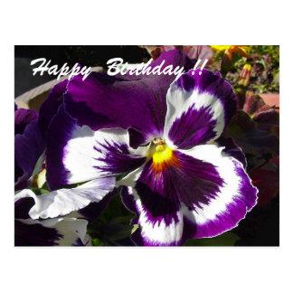 Happy Birthday Pansy Postcard