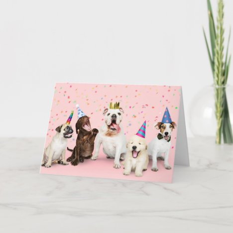Happy Birthday Party Animals Card