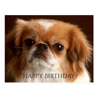 Happy Birthday Pekingese Red Brown Puppy Dog Black Postcard