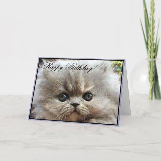 Happy Birthday Persian Kitten Greeting Card Zazzle