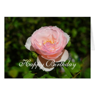 Happy Birthday Pink English Rose Greeting Card