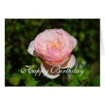 Happy Birthday Pink English Rose Card