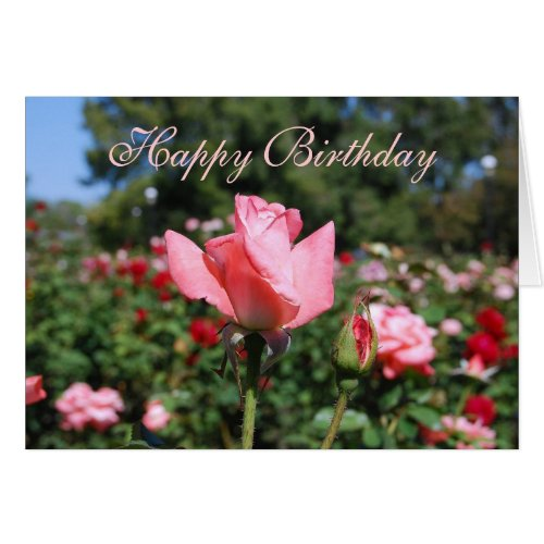 Happy Birthday Pink Roses in Garden Card