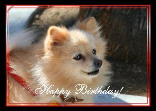 Pomeranian Dog Birthday Cards Zazzle