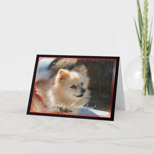 Happy Birthday Pomeranian Greeting Card Zazzlecom