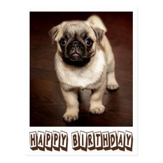 Happy Birthday Pug Puppy Dog Brown Postcard
