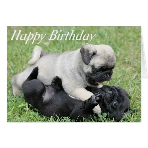 Celebrate The Wrinkles With These Pug Birthday Cards The Cool