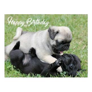 Happy Birthday Pug Puppy Dog Postcard