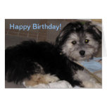 Happy Birthday  Puppy Havanese Rescue Greeting Cards