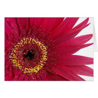Happy Birthday - red gerbera Card