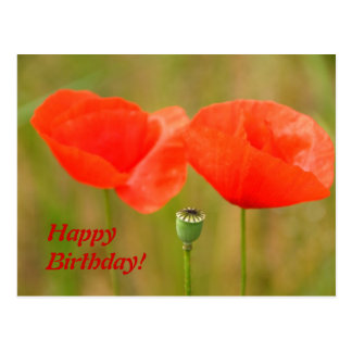 Happy Birthday - Red Poppies Postcard