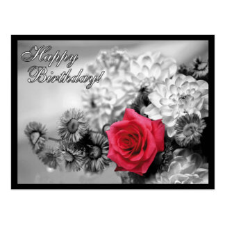 Happy Birthday! Red Rose with Black and White Postcard