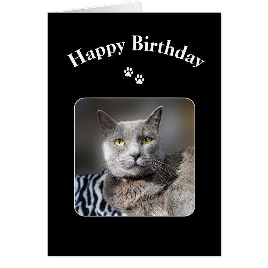 Russian Blue Cat Birthday