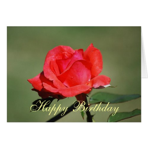 Happy Birthday Scarlet Rose Card