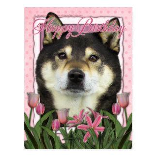 Happy Birthday - Shiba Inus - Yasha Postcard