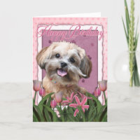 Happy Birthday - ShihPoo - Maggie Card