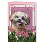 Happy Birthday - ShihPoo - Maggie Cards