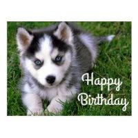 Happy Birthday Siberian Husky Puppy Dog Post Card