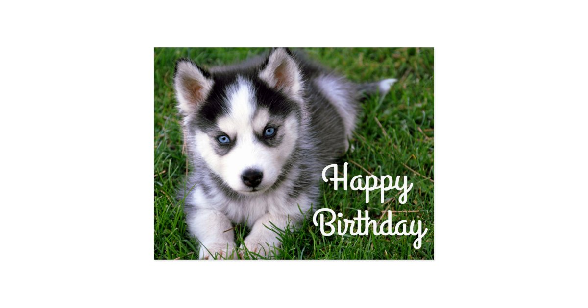 Happy Birthday Siberian Husky Puppy Dog Post Card Zazzle Com