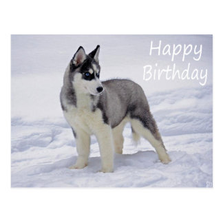 Happy Birthday Siberian Husky Puppy Dog Post Card