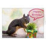 Happy Birthday Squirrel Cards