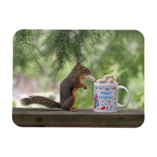 Happy Birthday Squirrel Magnets