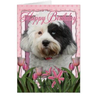 Happy Birthday - Tibetan Terrier Card