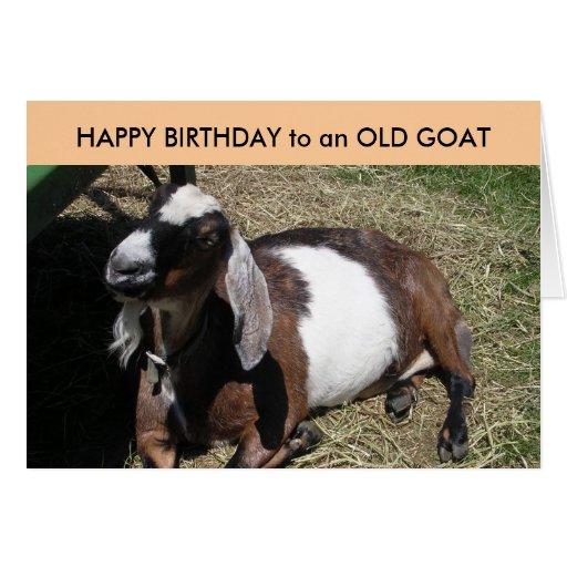 Happy birthday goat - photo#9