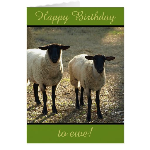 Happy Birthday to Ewe From the Flock! Customizable Greeting Card