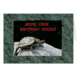 Happy Birthday, Turtle on Rock Greeting Cards