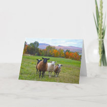 Happy Birthday Vermont Sheep in Autumn Card