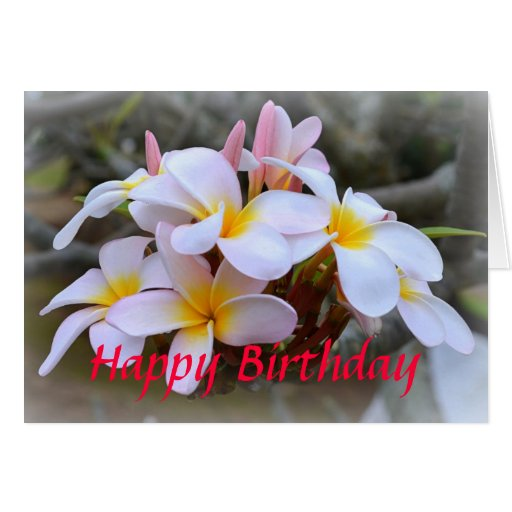 Happy Birthday White and Pink Plumeria, Pink Greeting Card