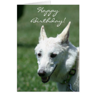 Happy Birthday White German Shepherd greeting card
