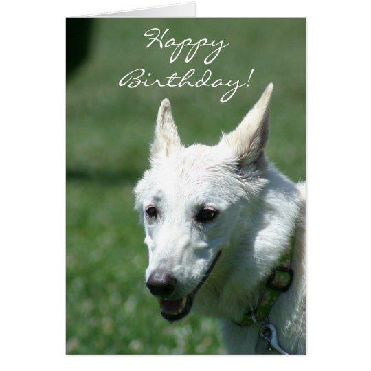 Happy birthday white german shepherd greeting card zazzle happy birthday white german shepherd greeting card m4hsunfo