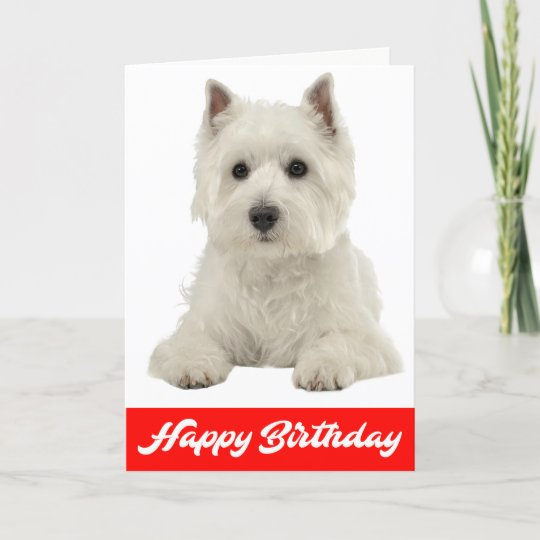 Happy Birthday White Highland Terrier Puppy Dog Card Zazzle