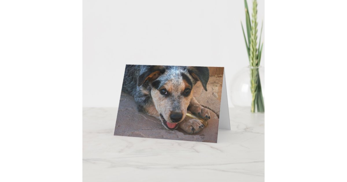 Happy Birthday Wishes For Dog Lovers Card Zazzle Com