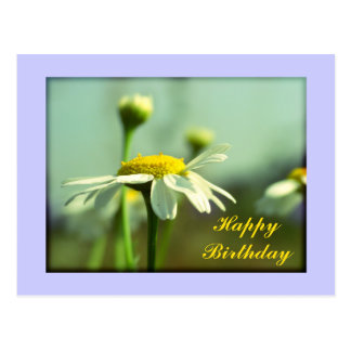 Happy Birthday with Camomille flowers Postcard