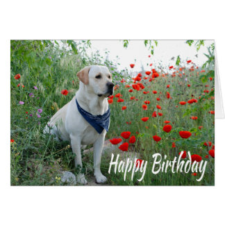 Happy Birthday Yellow Labrador Lab Puppy Dog Card