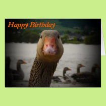 happy birthday you old bird. Funny -getting old Card
