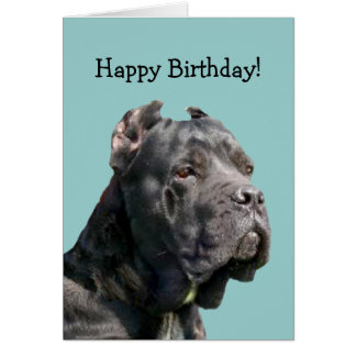 Happy Bithday Cane Corso greeting card