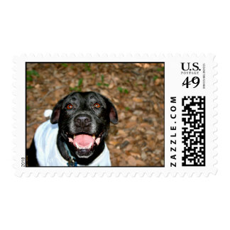 Happy black lab mix dog with fall leaves backgroun postage stamps