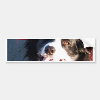 Happy Border Collie Bumper Sticker