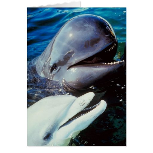 Happy Bottlenose Dolphins Greeting Card