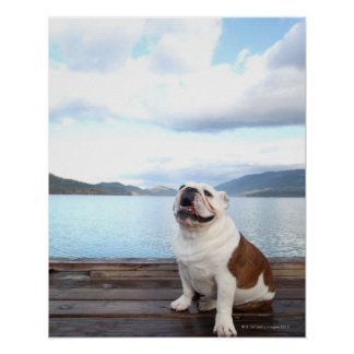 happy bull dog sitting on deck near lake poster